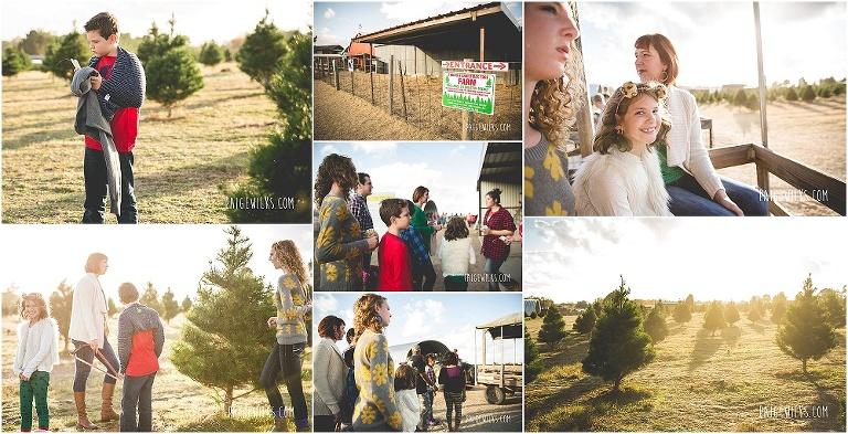 Elgin Christmas Tree Farm.Merry Bright The Perfect Tree Elgin Christmas Tree