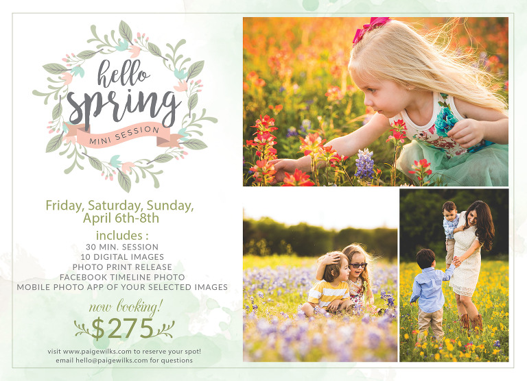 bluebonnet wildflower spring photos session austin
